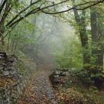 Nebelwaldbild